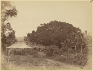 Le banian d'Ataï (1880)
